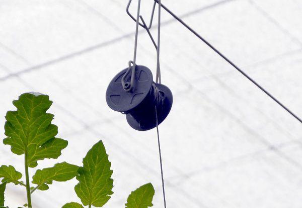carrete-entutorar-plantas-invernadero