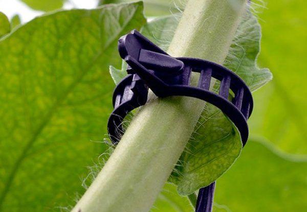 clips-fijación-ecoclip-guiar-plantas-tomate-pimiento-calabacin